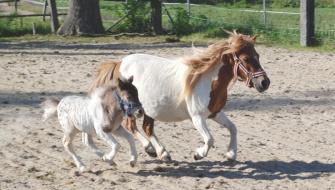 Koně z Kladrub na Země živitelce!